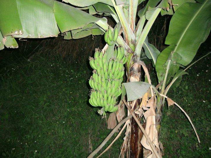 Exotické ovoce přímo ze stromu