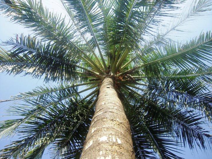 Palmy z naší zahrady